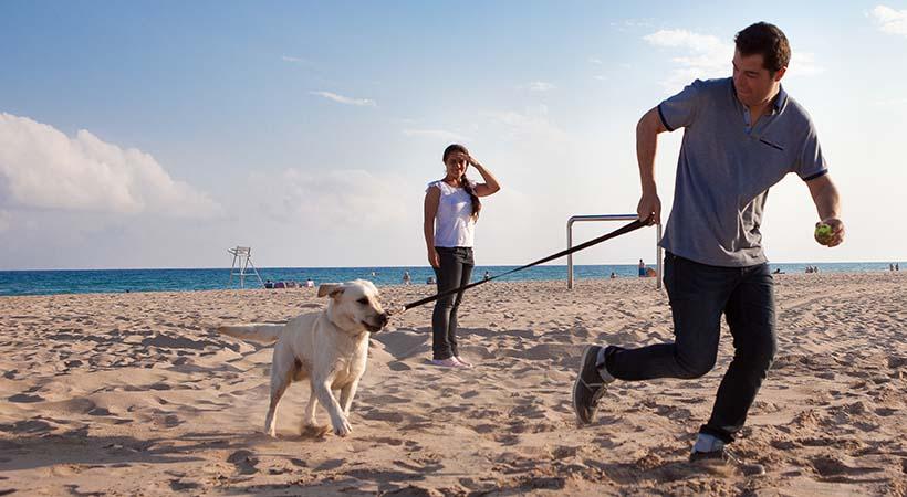 Top 8 consejos para viajar con tu perro