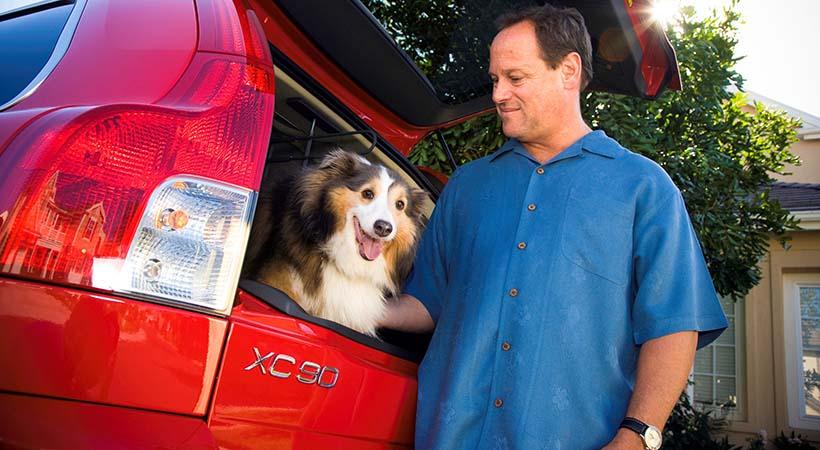 Perros, autos y los conductores que los ama