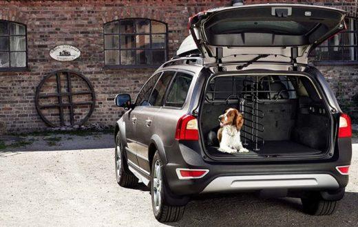 Perros, autos y los conductores que los aman