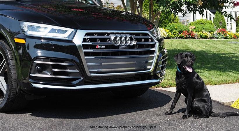 mejores vehículos para pasear con tu perro